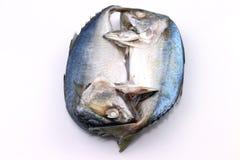 Рыбы скумбрии Стоковое фото RF