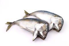 Рыбы скумбрии Стоковое Фото
