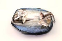 Рыбы скумбрии Стоковое Изображение RF