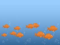 рыбы следуют за Стоковая Фотография