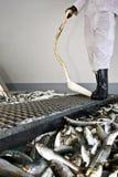 рыбы смотря работника выбора стоковые фото