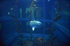 Рыбы Солнця стоковая фотография rf