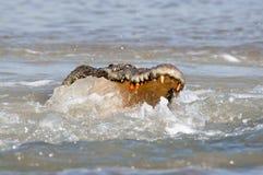 рыбы солёные Стоковое Изображение