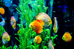Рыбы соленой воды в океане Стоковое Изображение RF