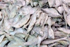 рыбы соли Стоковое фото RF