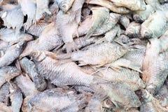 рыбы соли Стоковые Фото