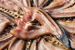Рыбы сушат Стоковое Изображение RF
