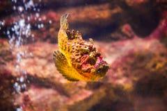 рыбы с кораллом и акватические животные Стоковые Фотографии RF