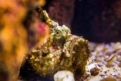 рыбы с кораллом и акватические животные Стоковые Фото