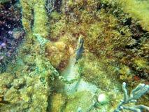 Рыбы с пляжа Pompano Стоковые Изображения