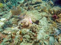 Рыбы с пляжа Pompano Стоковое Изображение