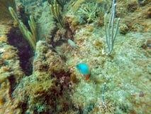 Рыбы с пляжа Pompano Стоковое фото RF
