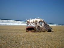 рыбы тропические Стоковое фото RF