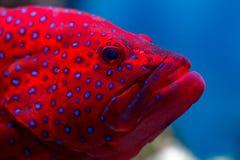 рыбы тропические Стоковая Фотография