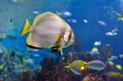 рыбы тропические стоковые изображения