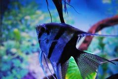 рыбы тропические Стоковые Изображения RF