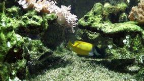 рыбы тропические видеоматериал