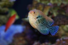 рыбы тропические стоковые фото