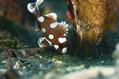 2 рыбы тропической Стоковая Фотография RF