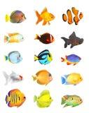 рыбы установили тропическим Стоковое Изображение RF