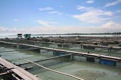 рыбы фермы Стоковая Фотография RF