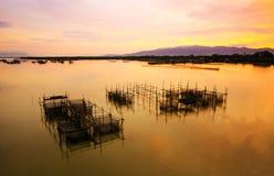Рыбы фермы Стоковые Фотографии RF