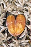 Рыбы 1 формы сердца Стоковое Фото