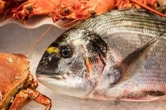 Рыбы ходят по магазинам дисплей с красивыми свежими лещом моря и crustaceans Стоковые Изображения RF