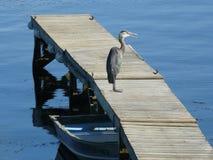Рыбы цапли ждать Стоковое Изображение RF