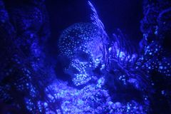 Рыбы черепа аквариума стоковые изображения rf