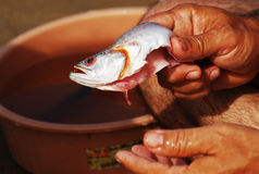 рыбы чистки Стоковое Фото
