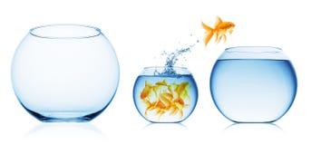 рыбы шара близкие изолированные вверх по взгляду стоковая фотография