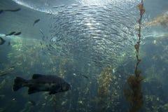 рыбы шарика Стоковое Фото
