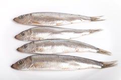 Рыбы шпротины на белой предпосылке Стоковые Фото