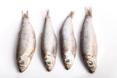 Рыбы шпротины на белой предпосылке Стоковые Изображения