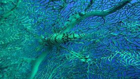 Рыбы льва на коралле Gorgonian трудном в Красном Море видеоматериал