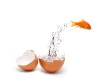 рыбы яичка Стоковое Фото