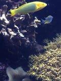 Рыбы! Стоковая Фотография RF