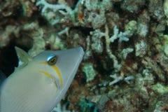 рыбы Стоковое Фото