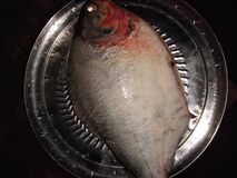 Рыбы A1 стоковое фото rf