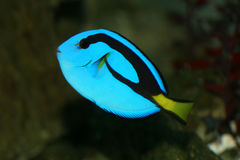 рыбы Стоковая Фотография RF