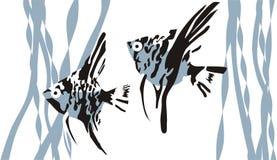 рыбы 2 Стоковое Фото