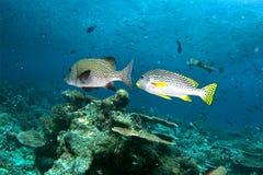 рыбы 2 Стоковые Фото