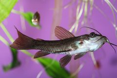 рыбы стоковые фото