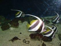 Рыбы Стоковые Фотографии RF