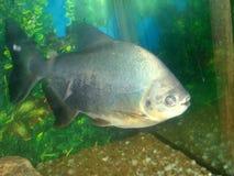 рыбы Стоковые Изображения RF