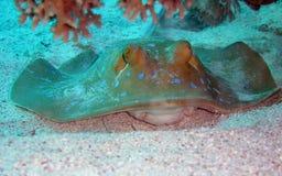 рыбы Стоковое Изображение RF