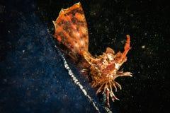 Рыбы Agonomal на красочном морском дне Стоковые Фотографии RF