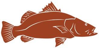 Рыбы Barramundi Стоковая Фотография