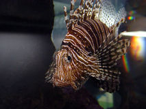 рыбы corral Стоковые Фото